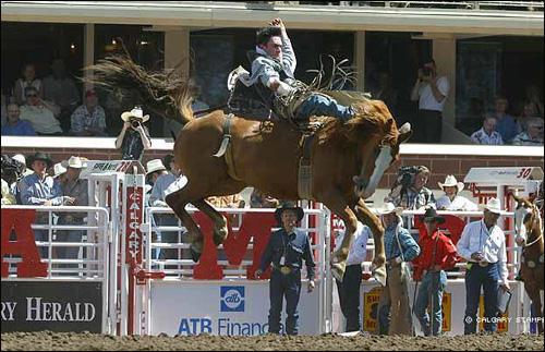 Calgary S 10 Day Rodeo Frenzy Ohmynews International